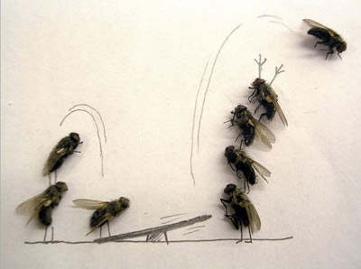 moscas5